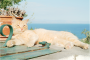 guido_maria_isolabella_iii_cat_on_cistern_paxos_2018.png