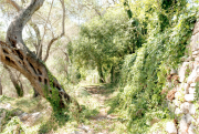 guido_maria_isolabella_paxos_footpath_2018.png