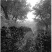 Gabriel Stauffer Paxos, Olive Trees and Footpath I 2014 barite & selenium print 1/9 47 x 47 cm, framed 64 x 64 cm