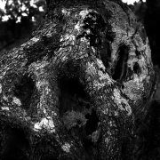 Jean-Manuel Simoes Paxos:Olive Trunk 3 2017, Selenium on gelatin silver print on Forte paper, Developed by photographer, 40x40 cm – 1/9