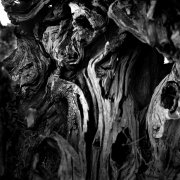 Jean-Manuel Simoes Paxos:Olive Trunk 5 2017, Selenium on gelatin silver print on Forte paper, Developed by photographer, 40x40 cm – 1/9