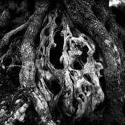 Jean-Manuel Simoes Paxos:Olive Trunk 13 2017, Selenium on gelatin silver print on Forte paper, Developed by photographer, 40x40 cm – 1/9