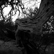 Jean-Manuel Simoes Paxos:Olive Trunk 10 2017, Selenium on gelatin silver print on Forte paper, Developed by photographer, 40x40 cm – 1/9