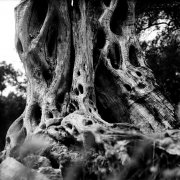 Jean-Manuel Simoes Paxos:Olive Trunk 11 2017, Selenium on gelatin silver print on Forte paper, Developed by photographer, 40x40 cm – 1/9