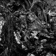 Jean-Manuel Simoes Paxos:Olive Trunk 12 2017, Selenium on gelatin silver print on Forte paper, Developed by photographer, 40x40 cm – 1/9