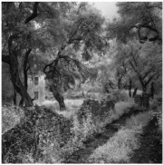 Gabriel Stauffer Paxos, Olive Trees and Footpath II 2014 barite & selenium print 1/9 47 x 47 cm, framed 64 x 64 cm